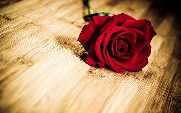 flower, rose, petals, wooden surface