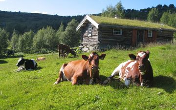 grass, summer, house, the herd, cows