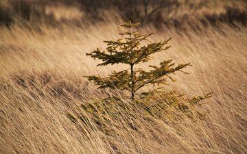 трава, природа, дерево, пейзаж, поле, осень, растение