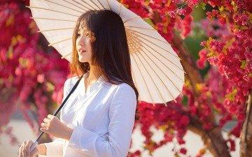 девушка, сад, сакура, зонтик, азиатка