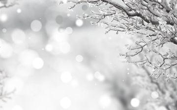 снег, зима, ветки, иней, чёрно-белое