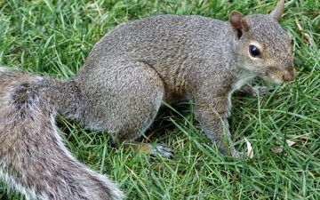grass, nature, park, animal, protein, rodent