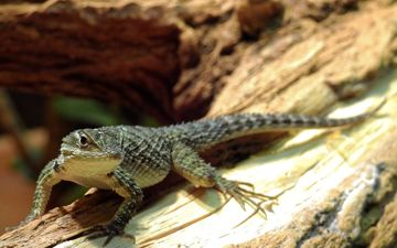 nature, lizard, reptile