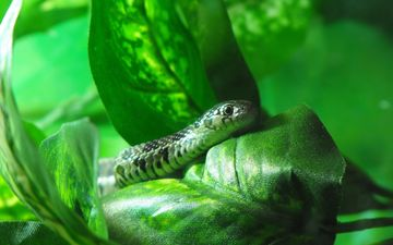 nature, animals, snake, reptile, sting