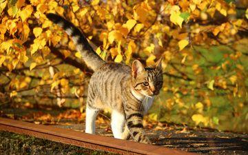 природа, листья, кот, листва, кошка, осень, котенок