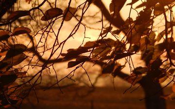 природа, дерево, листья, осень