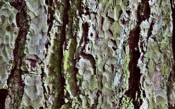 nature, tree, texture, pattern, trunk, close-up, bark, log
