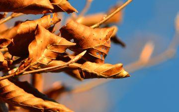 небо, ветка, дерево, листья, осень