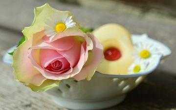 цветы, цветок, роза, ромашки, розовый, ваза, печенье, выпечка, натюрморт