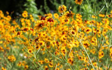 цветы, ярко, растение, желтые, боке