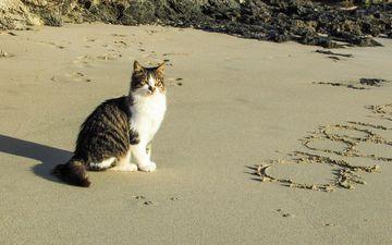 море, песок, пляж, кот, мордочка, кошка, взгляд, животное