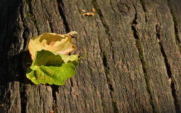 природа, листья, листва, осень