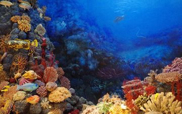 море, рыбки, рыбы, кораллы, подводный мир, тропические рыбы