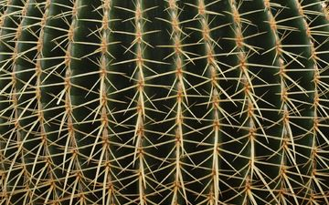 texture, macro, flower, barb, plant, spikes, cactus
