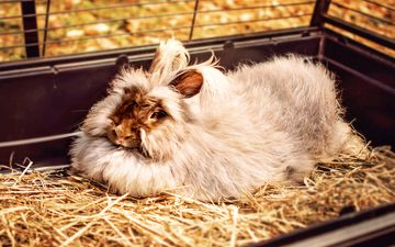 мордочка, сено, пушистый, ушки, кролик, мех, домашнее животное