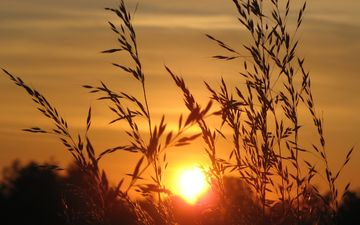 the sky, grass, sunrise, the sun, nature, landscape, field, horizon, spikelets, plant
