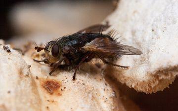 природа, макро, крылья, насекомые, гриб, муха