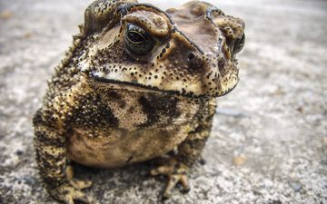фон, лягушка, жаба, амфибия, земноводные