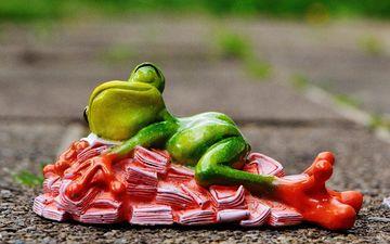 sleep, toy, frog, money, decoration, figure, souvenir