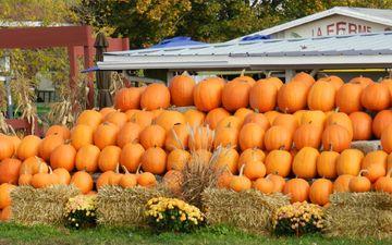 market, autumn, harvest, vegetables, pumpkin