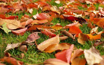 трава, природа, листья, листва, осень