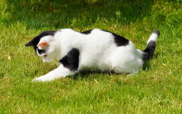 grass, cat, spotted, playful