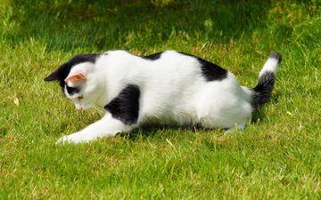 трава, кот, кошка, пятнистый, игривый