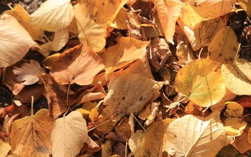 nature, leaves, autumn, dry