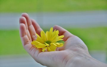 yellow, hand, flower, petals, fingers, palm