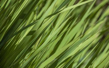 трава, природа, зелень, растения, лето