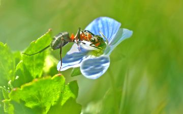 nature, insect, flower, blur, ant, plant, closeup