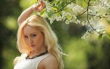 цветение, девушка, блондинка, ветки, взгляд, модель, весна, лицо, черемуха, rachelle