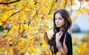 девушка, листва, взгляд, осень, модель, волосы, лицо, фотосессия, дуб, длинные волосы