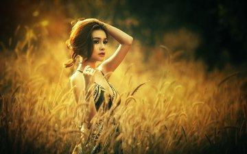 девушка, поле, взгляд, модель, волосы, лицо, азиатка, солнечный свет