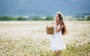 цветы, девушка, блондинка, поле, луг, модель, ромашки, белое платье, корзинка, длинные волосы, закрытые глаза