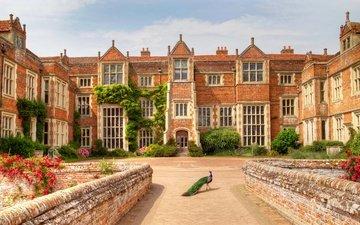 англия, птица, здание, дворец, павлин, особняк, музей, kentwell hall