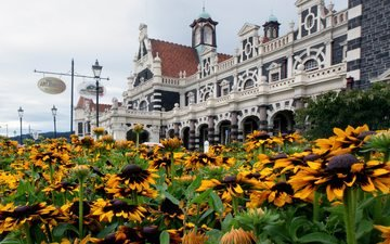 flowers, architecture, new zealand, dunedin