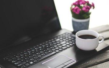 цветок, кофе, клавиатура, чашка, ноутбук