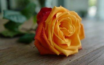 цветок, роза, лепестки, бутон, деревянная поверхность