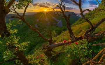 цветы, деревья, горы, солнце, холмы, природа, лес, закат, лучи, пейзаж, утро, рассвет, россия, крым