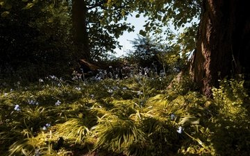 цветы, трава, деревья, природа, растения