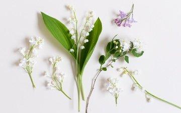 цветы, фон, ландыши, белый фон, сирень
