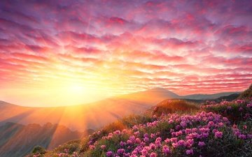 the sky, flowers, clouds, mountains, the sun, sunset, rays