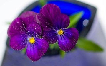 цветы, макро, капли, лепестки, анютины глазки