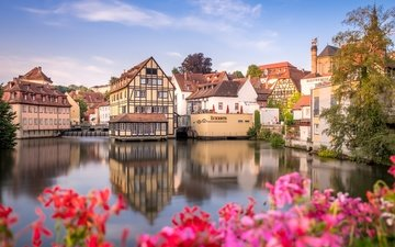 цветы, река, дома, здания, германия, бавария, бамберг, река регниц