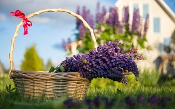 цветы, трава, лаванда, корзина, сиреневые
