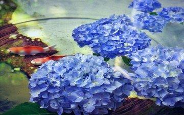 цветы, вода, рыбки, рыбы, водоем, пруд, гортензия
