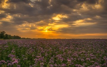 the sky, flowers, clouds, sunset, field, wildflowers