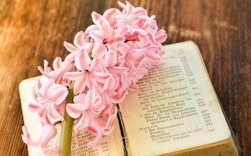 цветок, весна, лепесток, розовый, книга, страницы, гиацинт