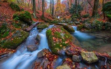 trees, stones, forest, leaves, autumn, russia, crimea, streams